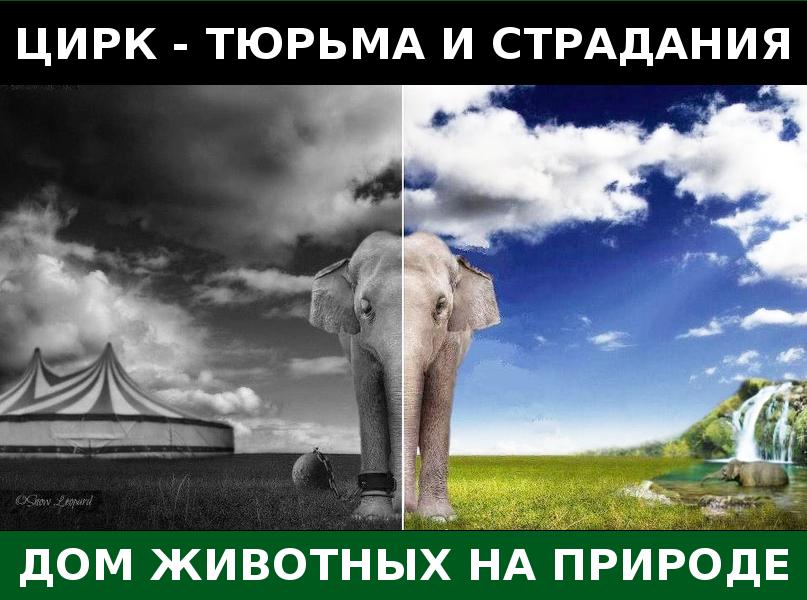 Акция у цирка огромных зверей – 19.10.2013