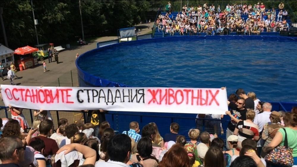 """""""Остановите страдания животных"""" – дельфинарий 14.06.2015"""