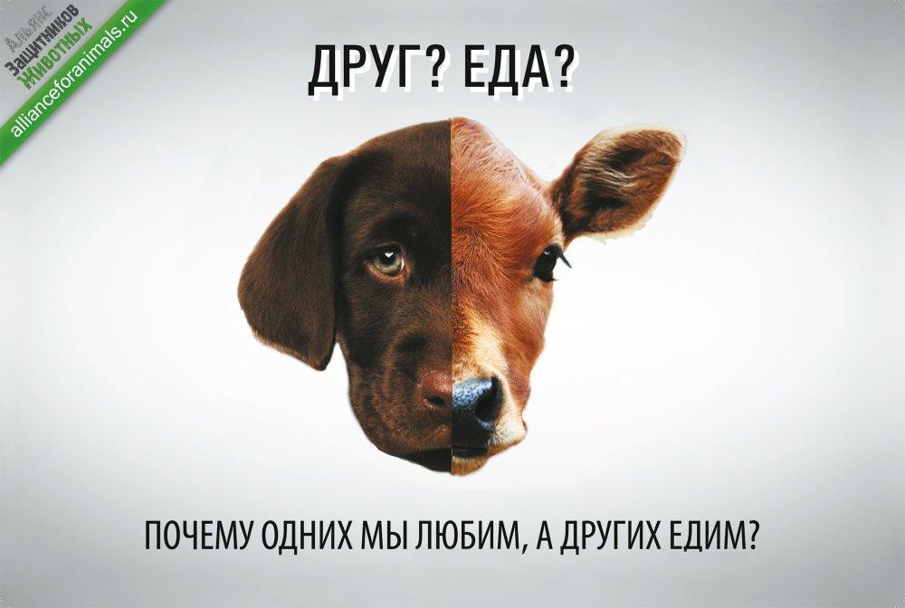 drug_eda