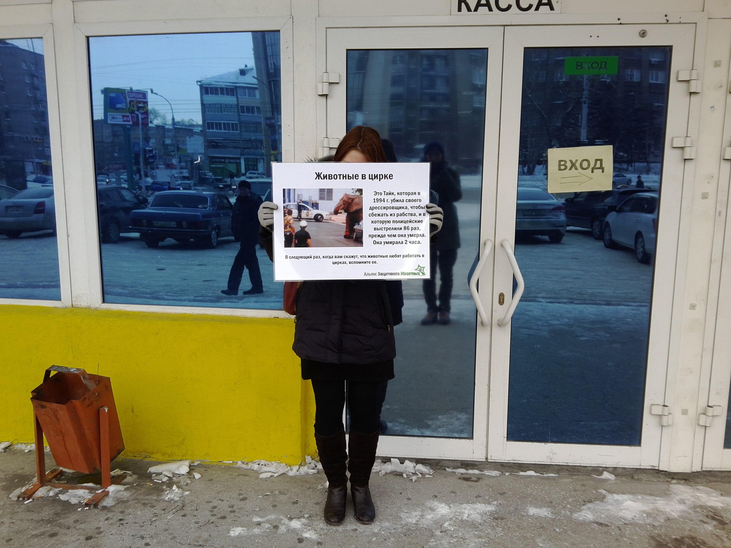 Одиночные пикеты против цирка в Новосибирске – 08.02.2014