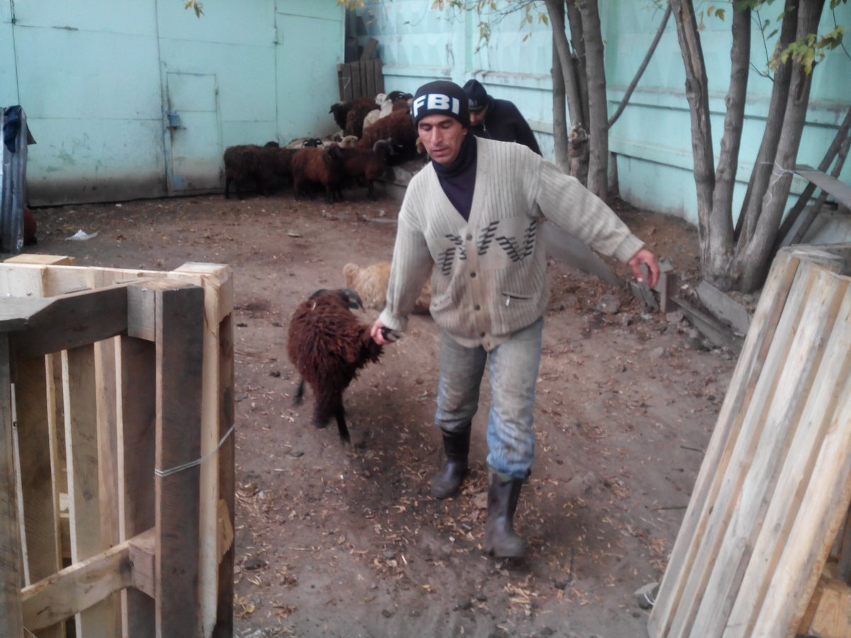 Защитники животных спасли от смерти 80 баранов – 04.10.2014