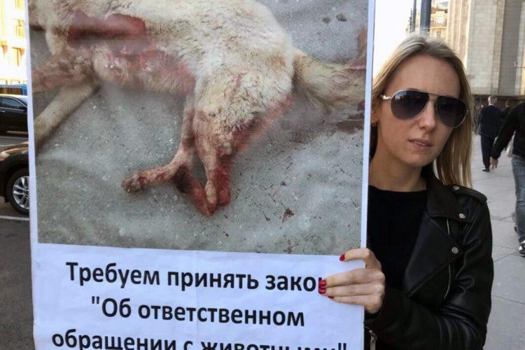 Пикеты у Думы за принятие закона о защите животных