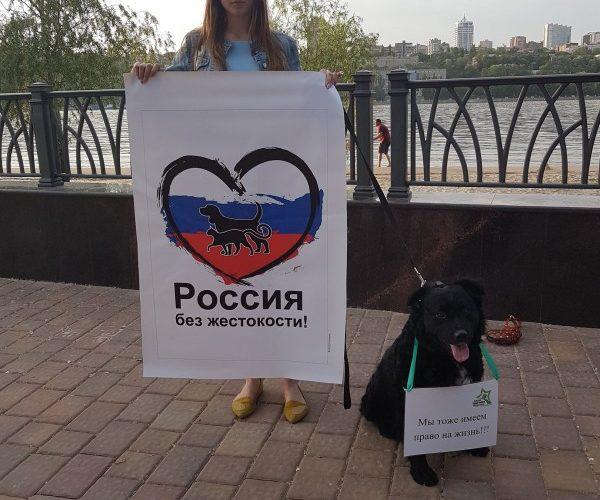 Пикеты перед футбольным чемпионатом в Ростове — 16.05.2018