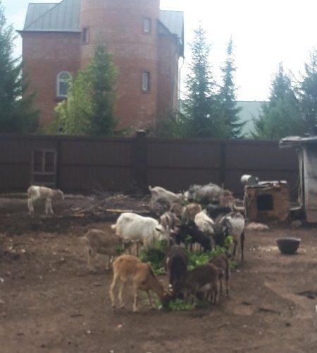 Визит зоозащитников к голодающим животным в Стерлитамаке — 06.06.2019