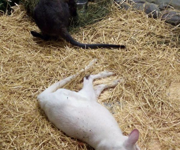 """Поездка в два контактных зоопарка """"Белый кенгуру"""" — 12.01.2020"""