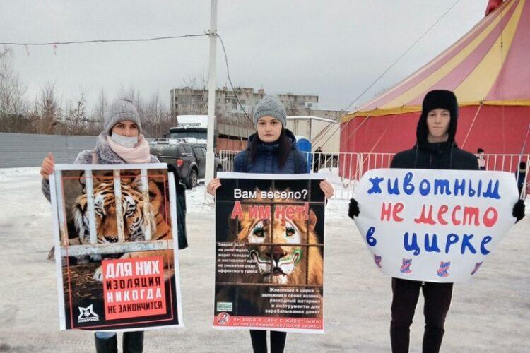 Пикет против цирка-шапито в Калуге – 05.01.2021