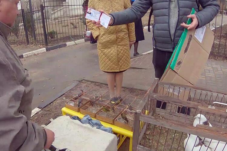 Спасение птиц на Благовещение в Воронеже – 07.04.2021