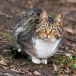 Заставка для - Стерилизация бездомных кошек в Калуге