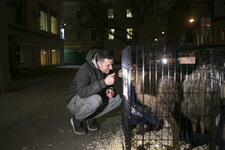 """Спасение овечек у редакции """"Новой газеты"""" — 29.10.2018"""