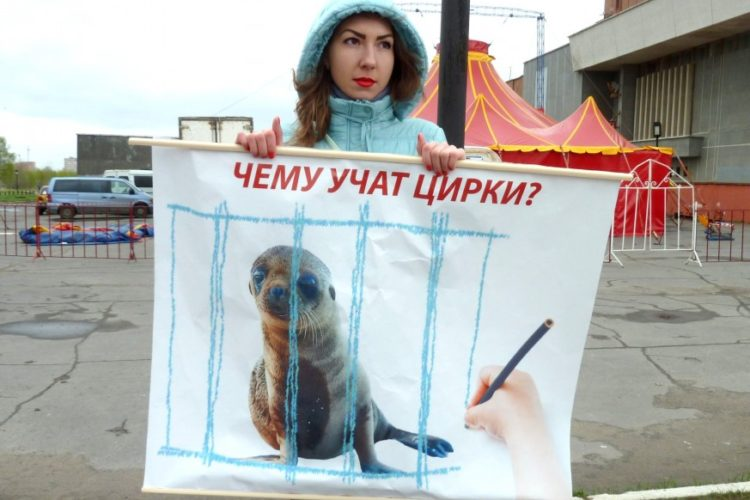 """Цирк-шапито """"Феерия"""" терпит убытки в Северодвинске"""