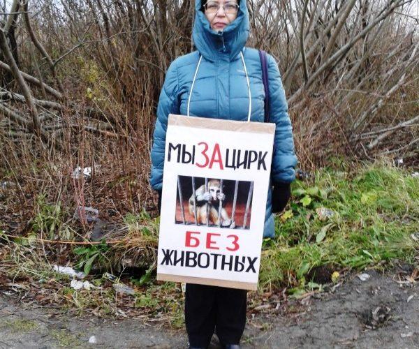 Одиночные пикеты у шапито в Северодвинске — 21.10.2018