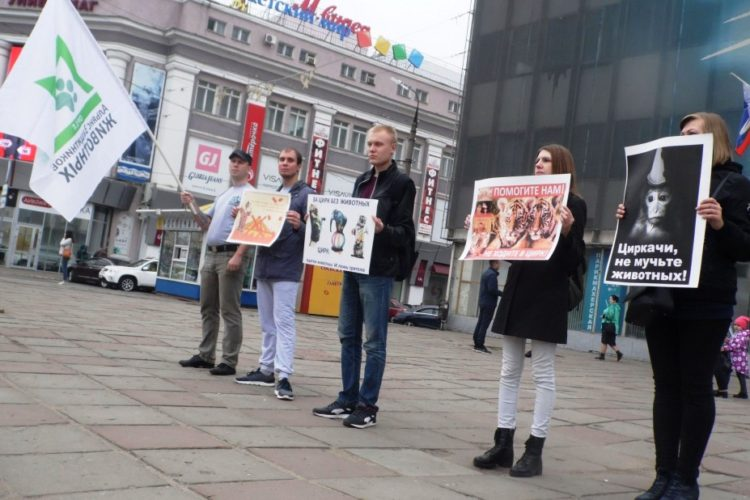 """Пикет """"За цирк без животных"""" в Орле — 20.10.2018"""
